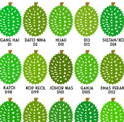 durian types